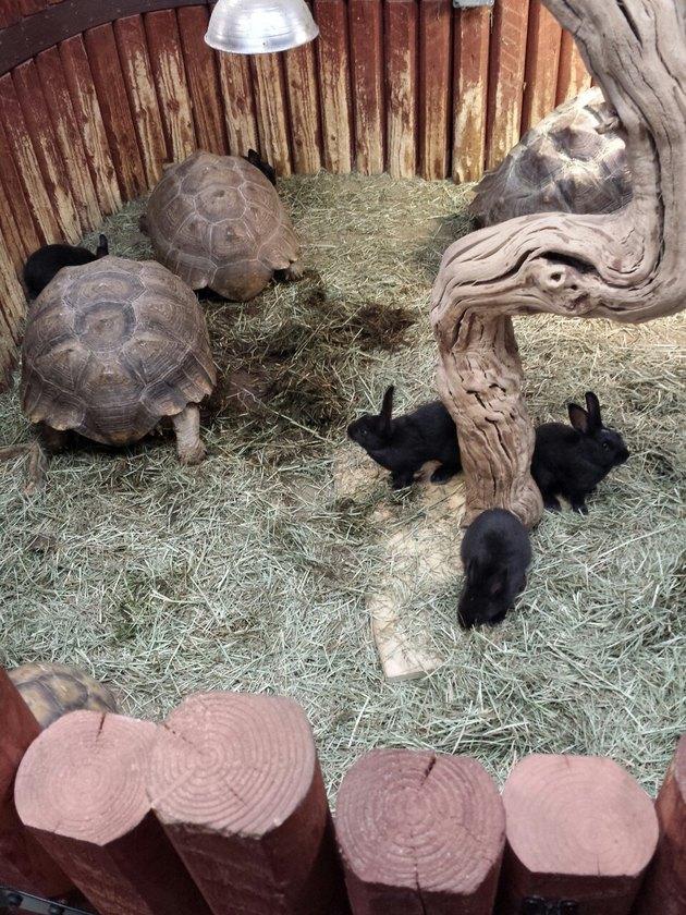 Tortoises and bunnies