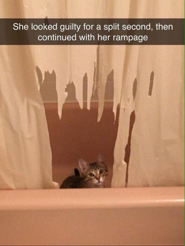Kitten shredding shower curtain (1)