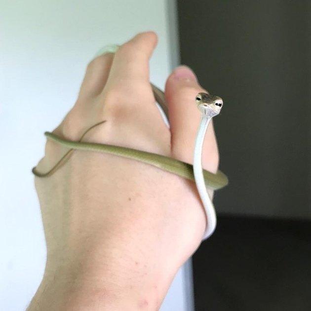 Small vine snake.
