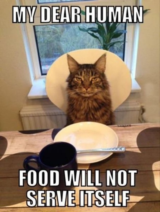 22 Cats Who Think They're in Charge
