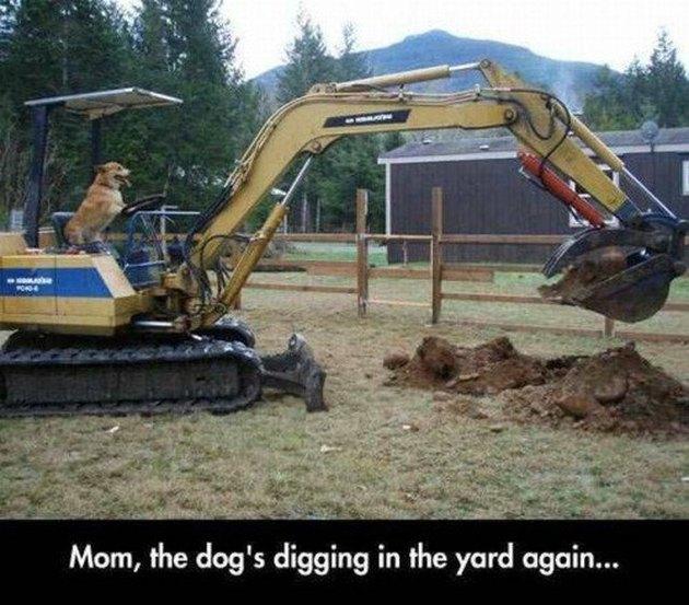 Dog sits behind wheel of excavator.