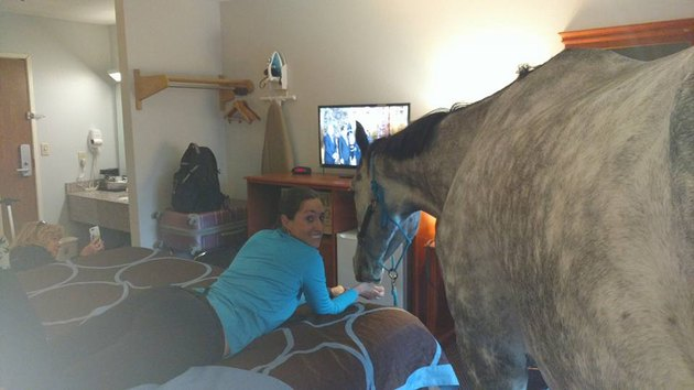 hanging with a horse
