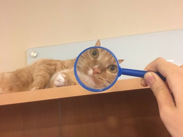 Cats under magnifying glasses are a thing