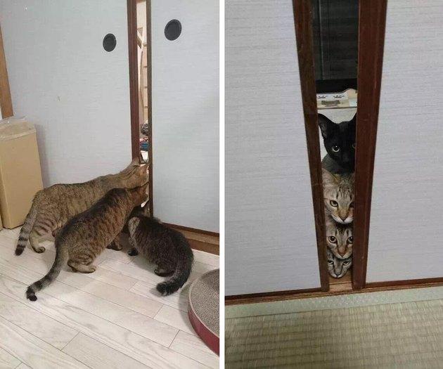 Cats looking through door suspiciously.