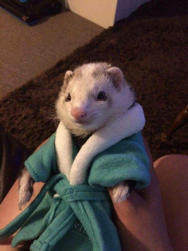 ferret wearing a bathrobe