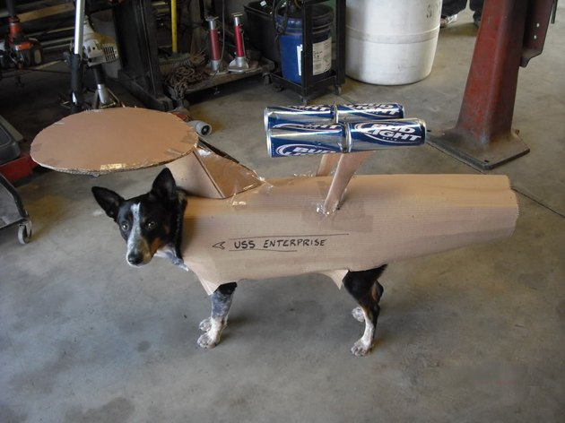 Dog in spaceship costume made of cardboard and beer cans.