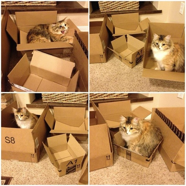 Photo set of cat sitting in different sizes of cardboard box.