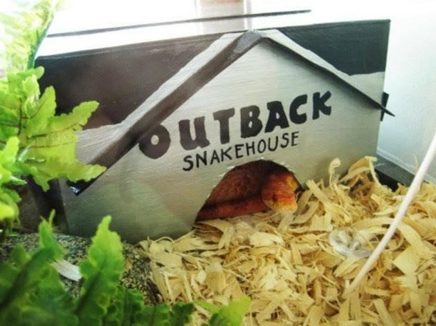 A snake is curled up in a hide that says Outback Snakehouse.