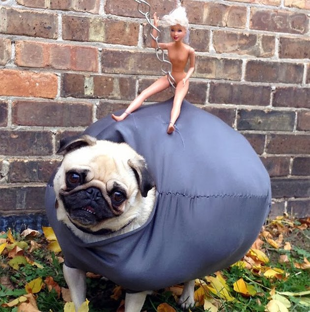 Dog dressed as wrecking ball.