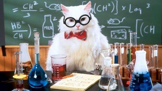 science cat is sciencing