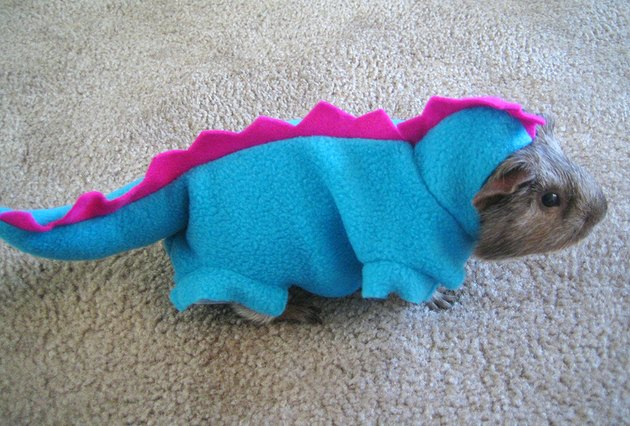 Guinea pig dressed as a dinosaur.