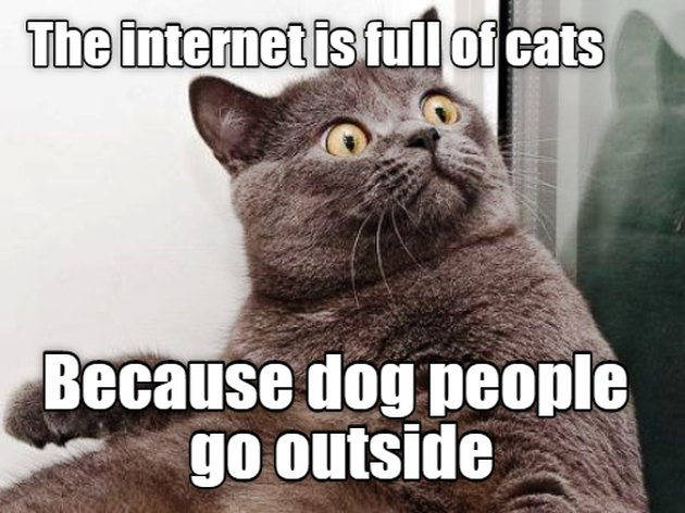 Surprised cat. Caption: The internet is full of cats because dog people go outside.