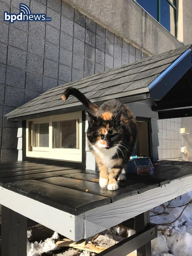 SWAT Cat Has a New, Super Luxe Condo