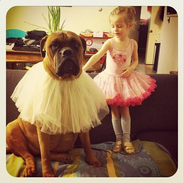 Girl and dog wearing tutus.