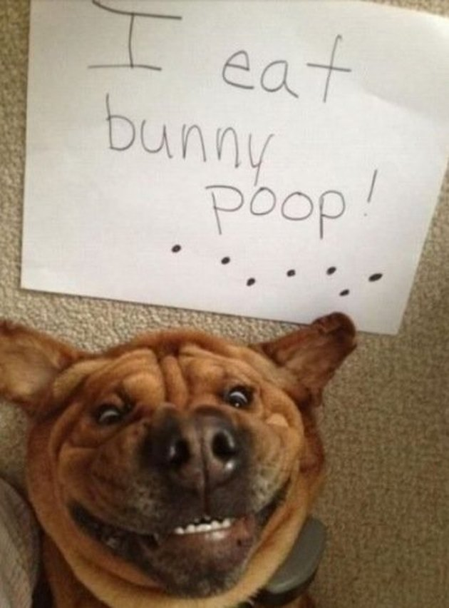 17 Animals Who Are Super Proud of Themselves Right Now
