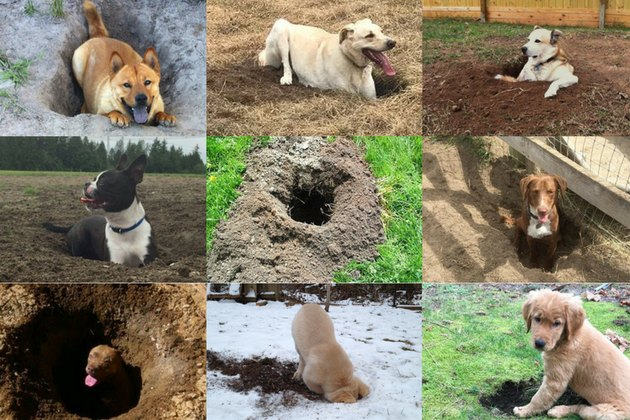 The 29 Most Outstanding Holes Dug By Dogs In 2017