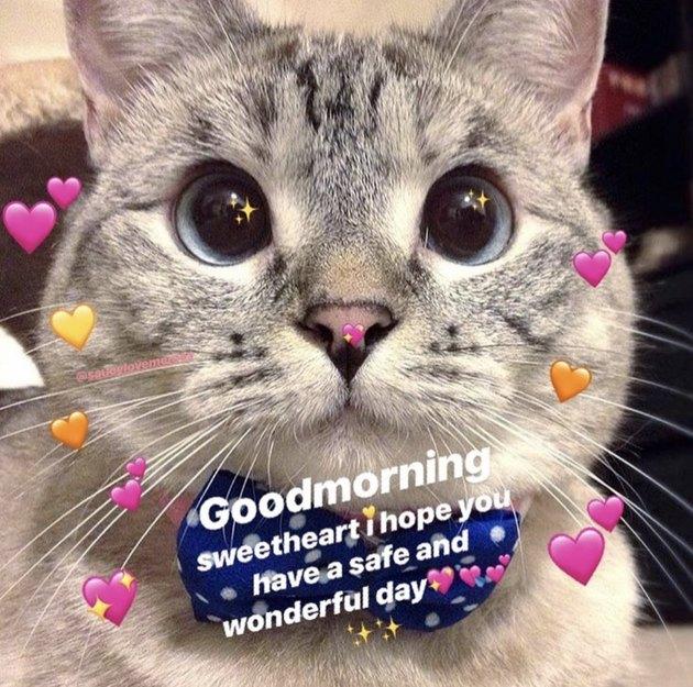 Snapchat cat