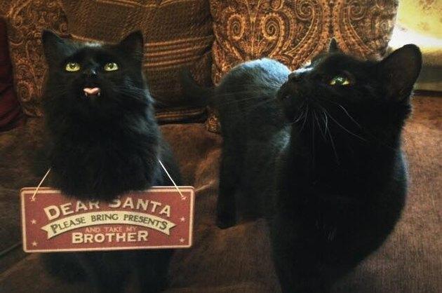 Sibling Cats