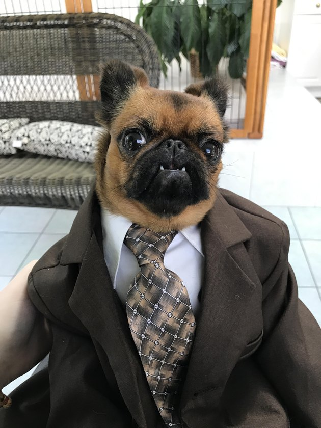 This Dog Wearing A Cheap Suit & Selling Used Cars Can Have All Our Money