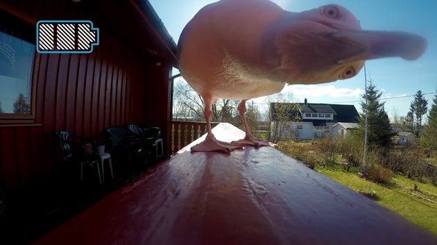 Norwegian seagull steals GoPro from photographer