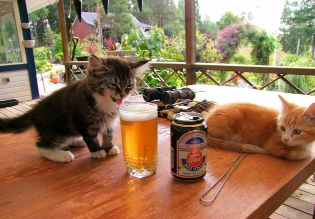 Kittens and beer