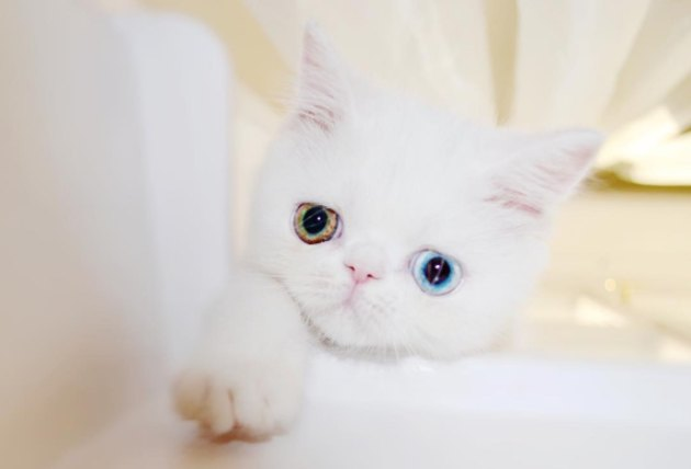 Meet Pam Pam, the tiny kitty with eyes from another planet
