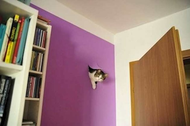 Cat breaking into wall