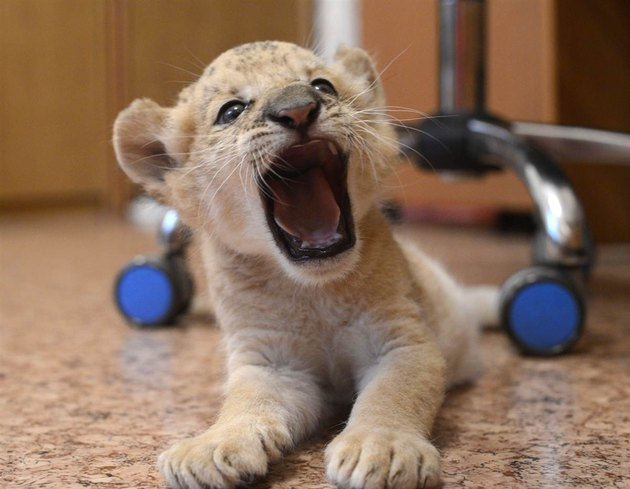 Animals Who Are Adorably Ferocious