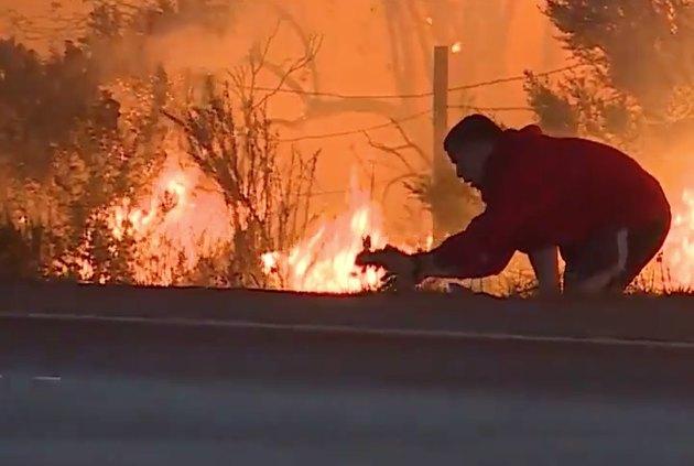 California motorist risks life to save wild rabbit from Ventura wildfire