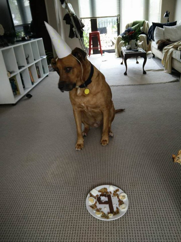 Dog with a special birthday breakfast