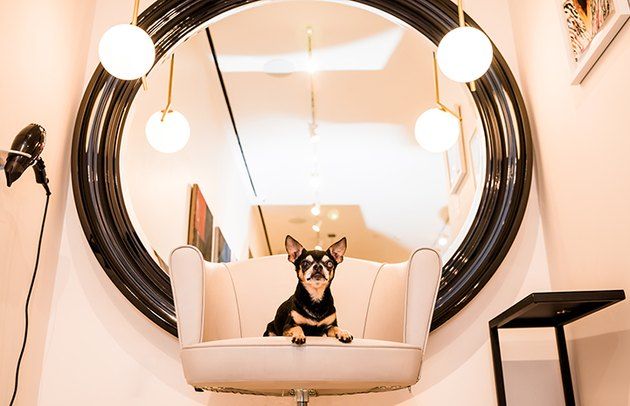 Senior Shelter Dog Gets Fabulous Makeover & We Just Can't Even