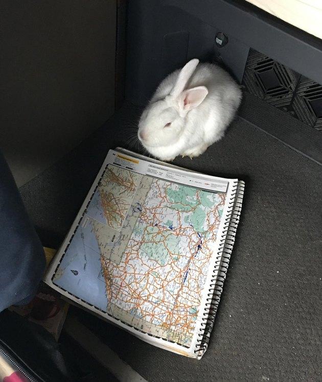 Truck driver finds bunny huddled under roadside bush