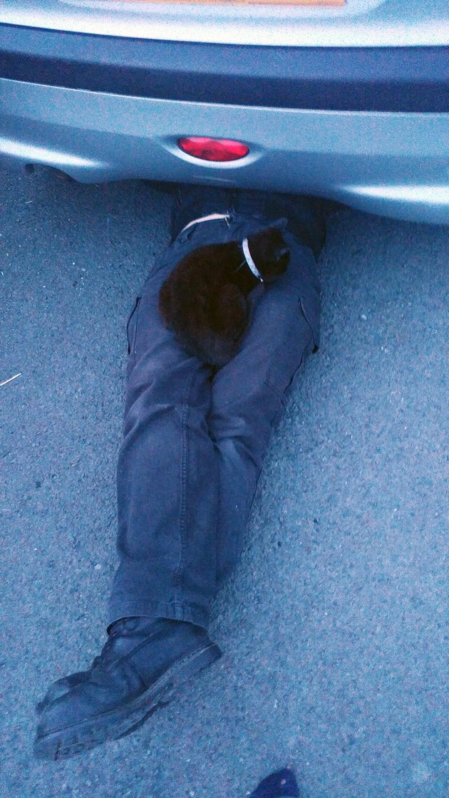 Cat sitting on lap of person under car.