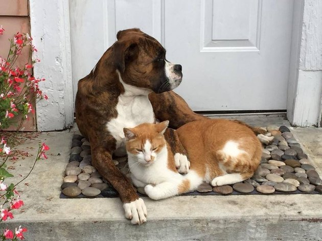 Dog and Cat on Front Step