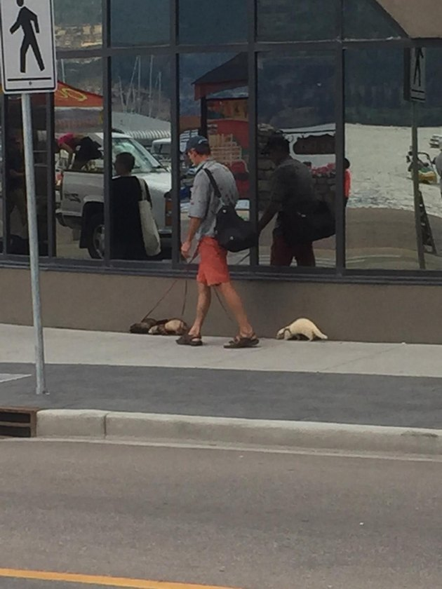 People Walking Animals Other Than Dogs and Looking Ridiculous