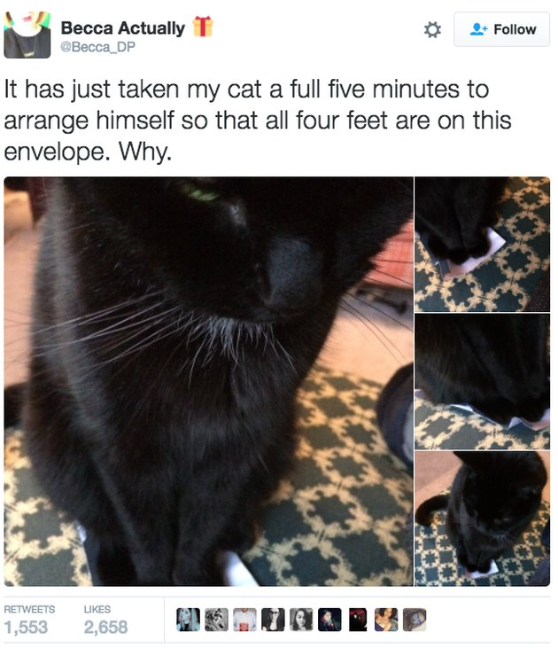 Tweet of a cat who took five minutes to arrange all four feet on an envelope for some reason.