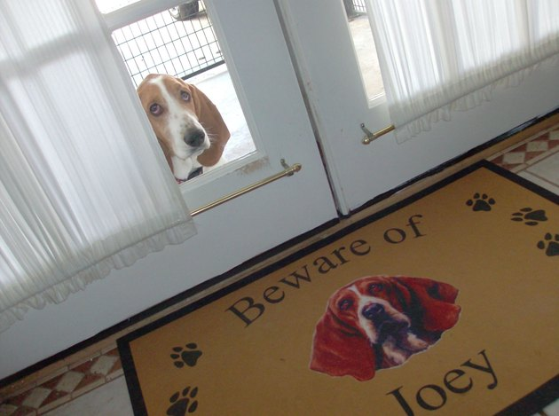 """Welcome mat with picture of basset hound that says """"Beware of Joey"""" in front of glass door through with Joey is looking."""