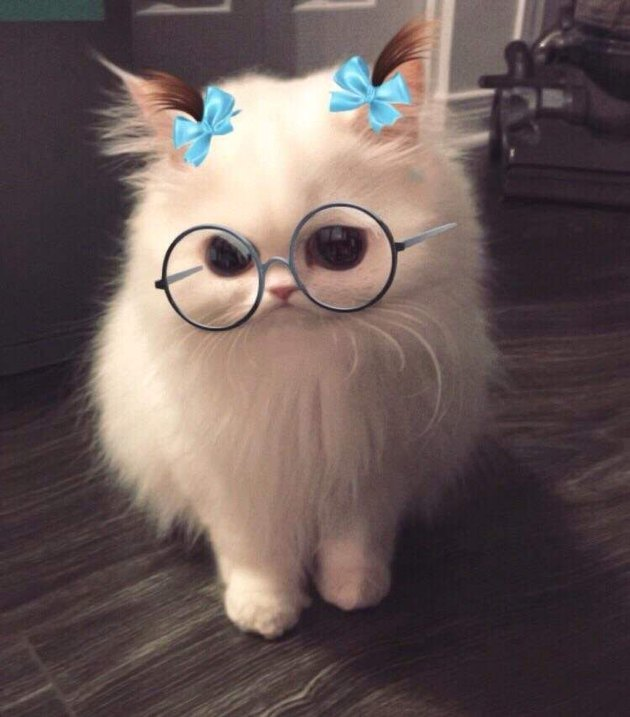 Animals Who Are Not Here for Your Snapchat Filters
