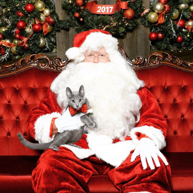 Santa holding young grey cat.
