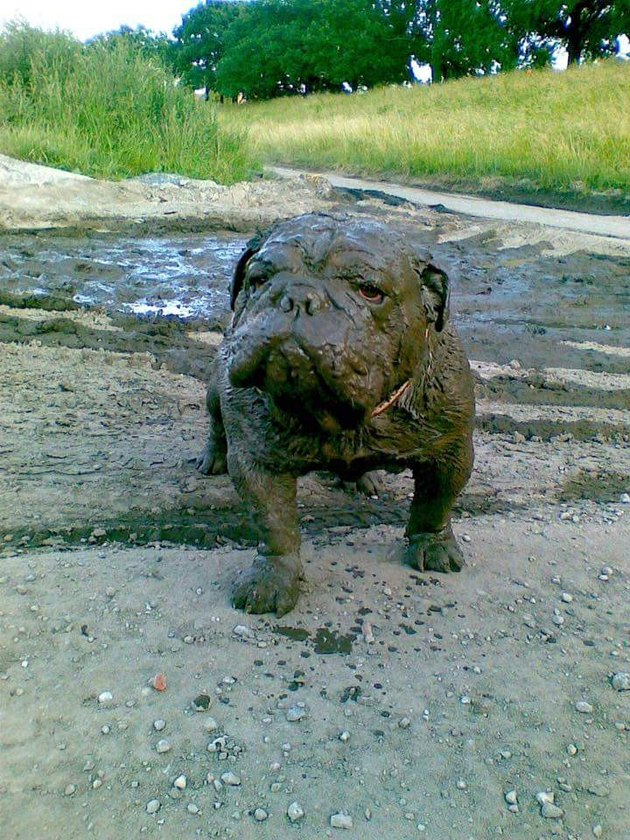 Dog completely covered in mud.