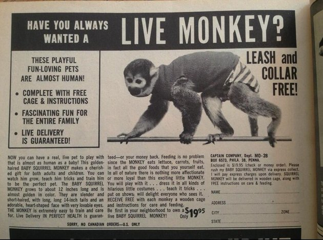 Ad for a pet monkey from the 1960's