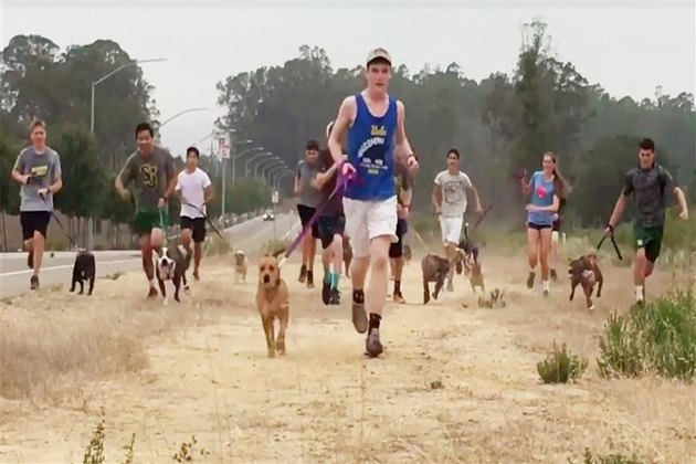 Cross Country Team/Shelter dogs