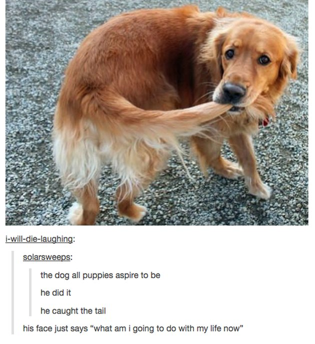 Dog with tail in mouth