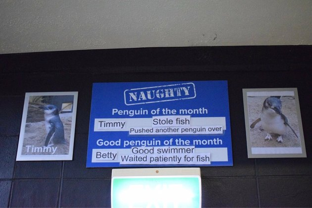 Sign with pictures of two penguins, one naughty, one nice.