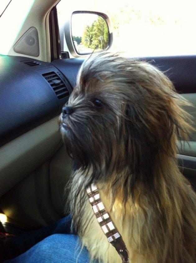 Star Wars Chewbarka dog