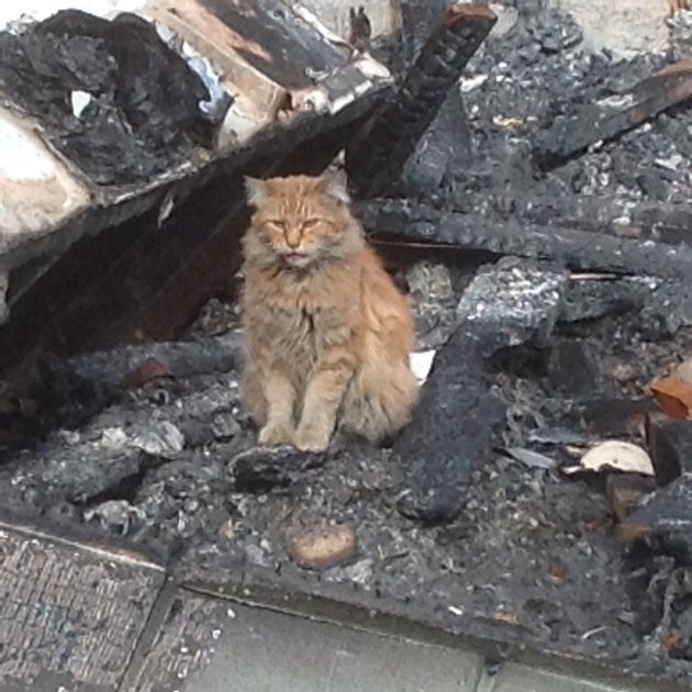 cat in rubble