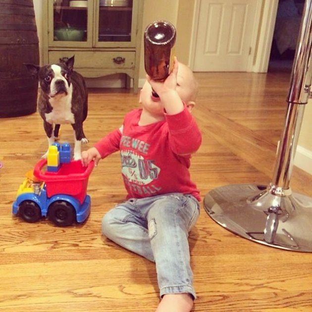Dog looks oncerned as toddler appears to drink beer.