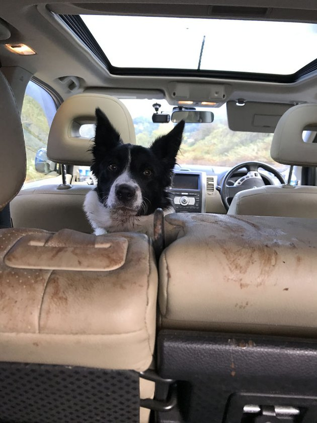 Dog in backseat of car with dirty seats.