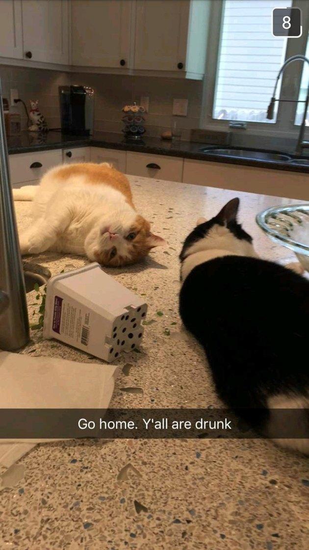 Catnip buddies