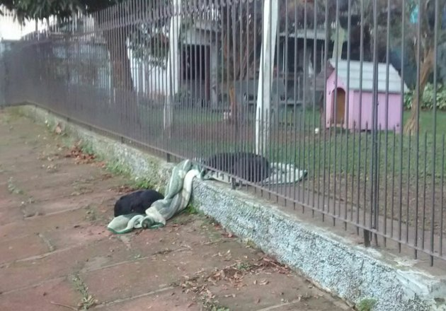 Brazilian puppy shares new blanket with homeless stray on other side of fence